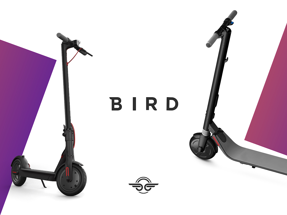 Challenger Brands Design that Disrupts Bird